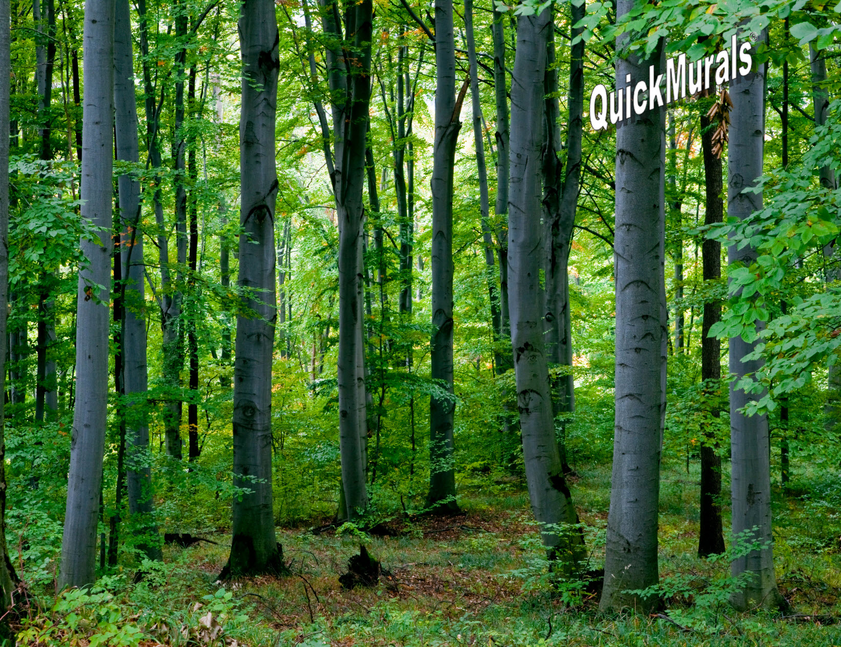 TheWallMuralStorecom Full Size Large Wall Murals Woodland