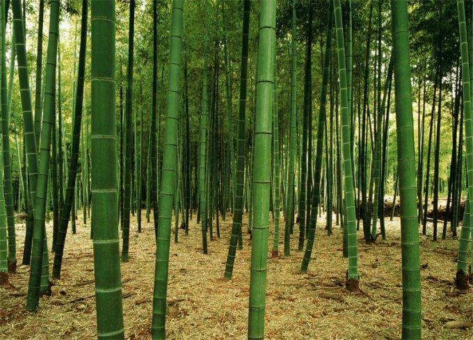 TheWallMuralStorecom Full Size Large Wall Murals Bamboo