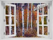 Autumn Birches Window 1-Piece Peel & Stick Mural