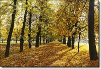 Autumn Park Mural