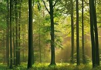 Autumn Forest Mural 216