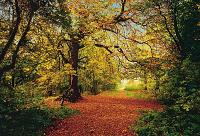 Autumn Forest Mural 8-068