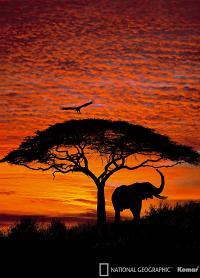 African Sunset Mural 4-501 by Komar